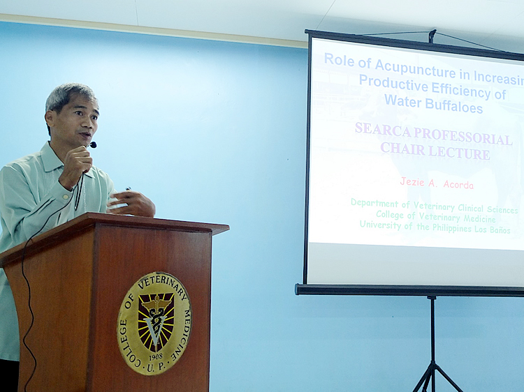 searca professorial chair grantee lectures on using acupuncture for water buffaloes