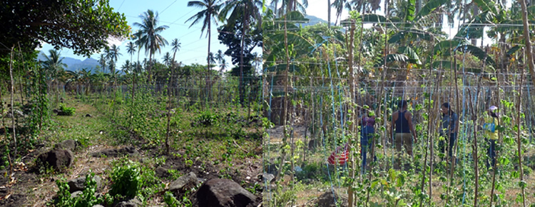 The project team inspecting the demo farm in Barangay Concepcion Banahaw, Sariaya Quezon .