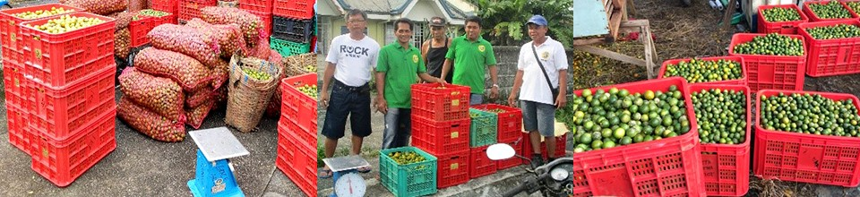 Value adding revives town's wasting calamansi industry