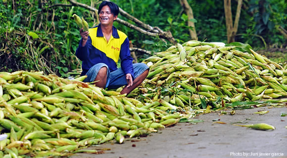improving-corn-insurance-program-to-enhance-resilience-to-climate-change-evidence-from-corn-production-in-the-philippines