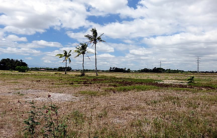 Uncultivated rice fields in Santa Barbara, Iloilo due to rehabilitation of irrigation system and suffering from nationwide drought.