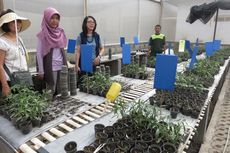 Bandung, Indonesia – Different chili cultivars undergo bio-fungicide treatment inside East West Indonesia's  greenhouse