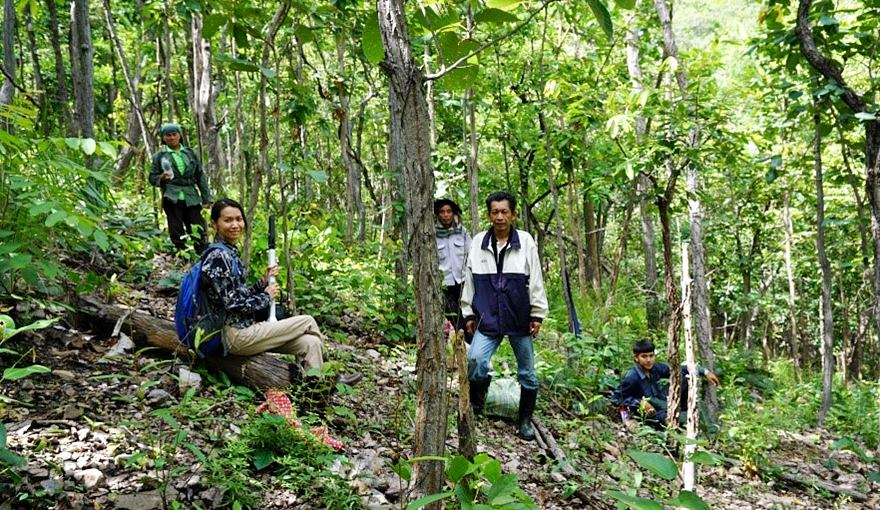 Ms. Siriluck Thammanu taking lead in the forest field survey.