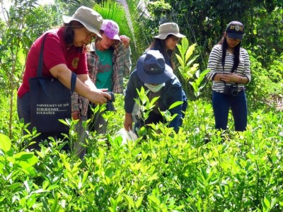 SEARCA and UPLB to conclude study on upgrading the calamansi value chain of Oriental Mindoro
